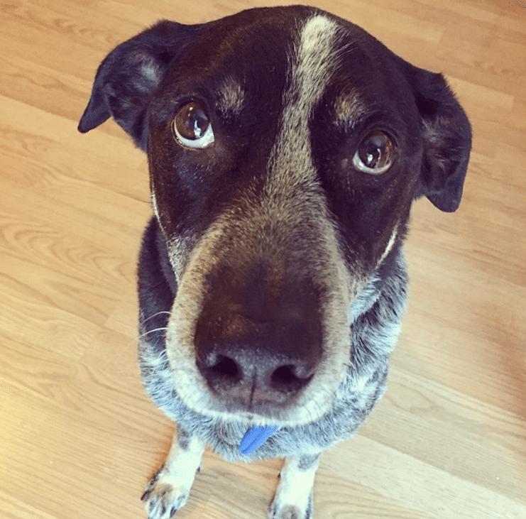 Jack's dog - Ralph Jackson